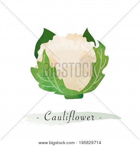 Colorful Watercolor Texture Vector Healthy Vegetable Cauliflower