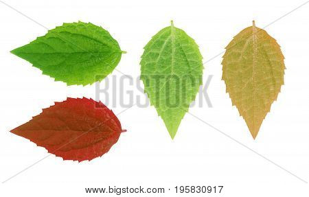 green leaf on a white set Summer, Nature, Spring, Fresh, Detail, Environment,