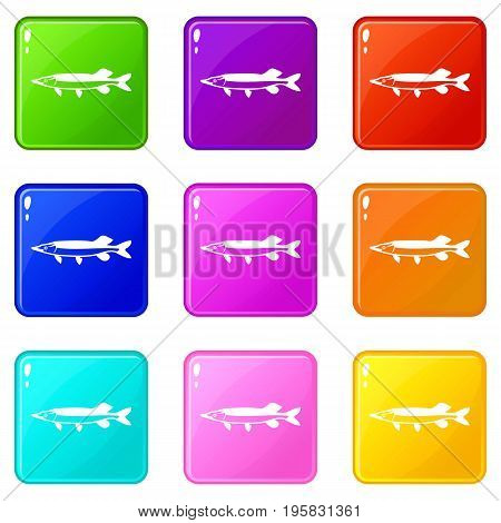 Saury icons of 9 color set isolated vector illustration