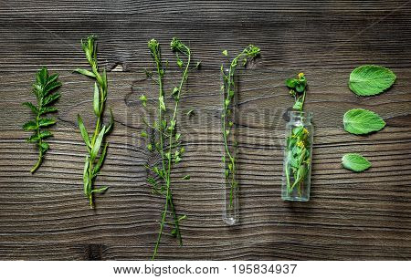 Alternative medicine. Store up medicinal herbs. Herbs on wooden table background.