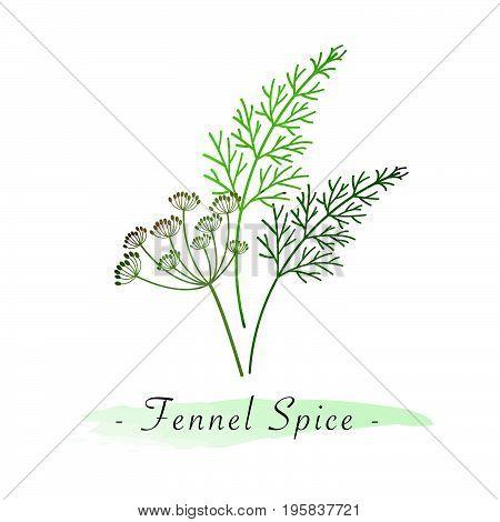 Colorful Watercolor Texture Vector Healthy Vegetable Fennel Spice