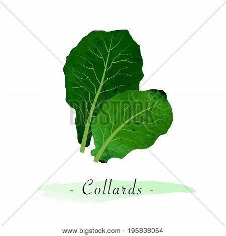 Colorful Watercolor Texture Vector Healthy Vegetable Collards