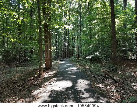 asphalt trail with fallen tree in the forest