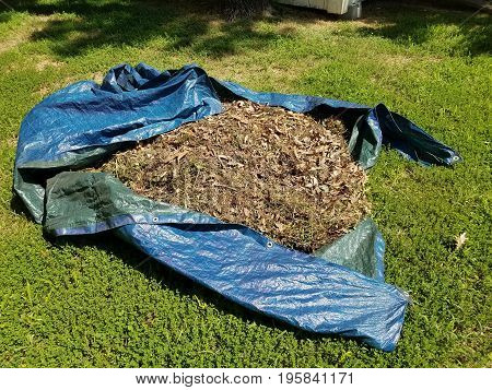 blue tarp on green grass filled with leaves and weeds