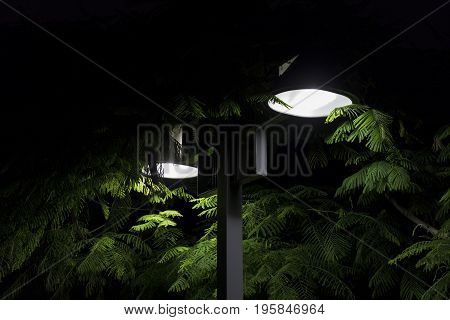 Mimosa tree lush green branches with fern like leaves under two street lights at night