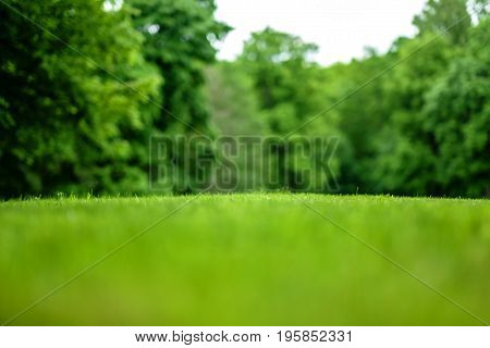 A beautiful view of a mown lawn in the background of a park with trees. Blurred everything except a narrow strip of grass in the middle of the frame.