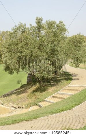Tree next to path of golf course in Andalusia Spain.