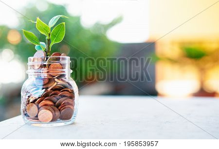 Plant in money, grows up in pot with coins