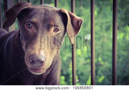 Curious Brown Dog on a Brown Balcony