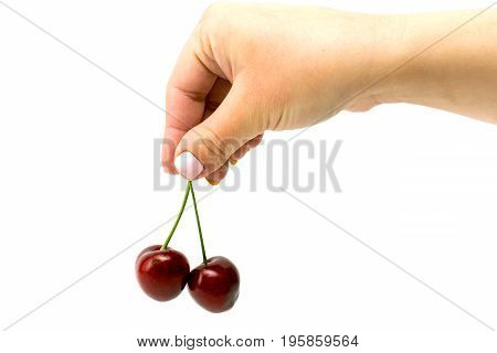 Two Ripe Cherries In Hand Isolated