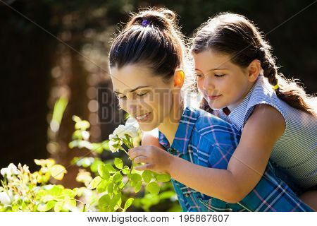 Daughter smelling rose with mother while enjoying piggyback ride at backyard