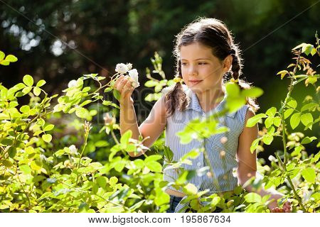 Innocent girl with braided hair looking at white flowers in backyard on sunny day