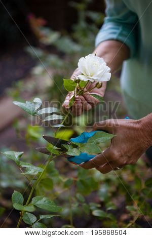 Cropped image of senior woman using pruning shears on white flower at backyard
