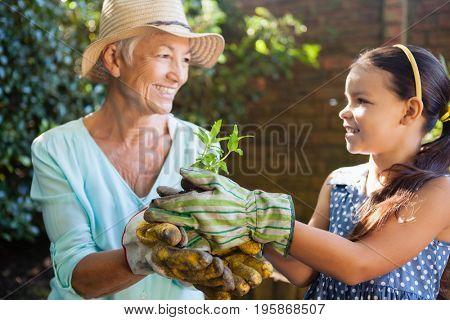 Smiling granddaughter and grandmother wearing gloves holding seedling at backyard