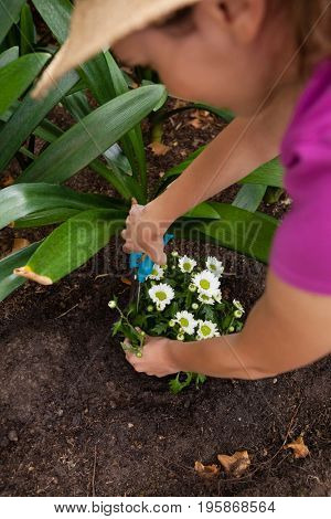 Cropped image of woman using pruning shears on flowering plant at backyard