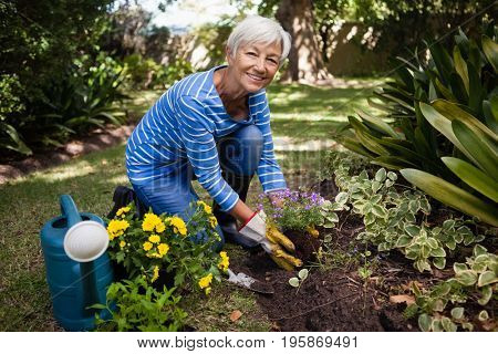 Portrait of smiling senior woman kneeling while planting flowers at backyard