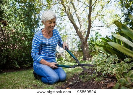 Senior woman kneeling while cutting plants with hedge trimmer at backyard