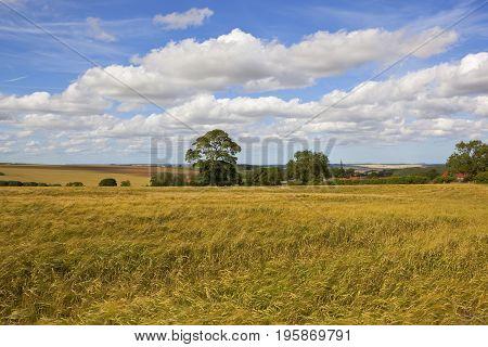 English Summer Landscape