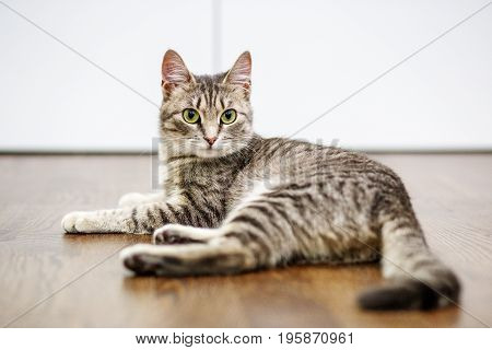 Beautiful cat is at home. The concept of pets.