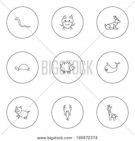 Set Of 9 Editable Zoology Doodles. Includes Symbols Such As Tall Animal, Urchin, Lobster And More