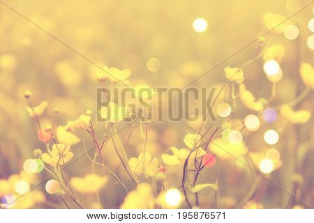 Film Effect.blurry Photo Effect.  Blurred And De Focused Yellow Blossom And Green Stalks Leaves For