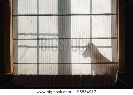 Beagle silhouette against the window. The dog sitting on the windowsill.