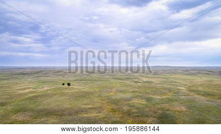 landscape of Nebraska Sandhills with two lonely trees, aerial view