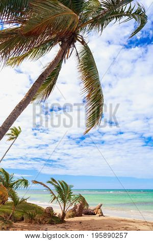 incredible empty tropical caribbean beach with palm tree above the sea. Vacation concept. Dominican Republic