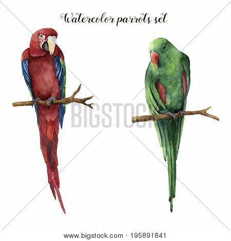 Watercolor parrots. Hand painted red-and-green macaw and red-winged parrot isolated on white background. Nature illustration with bird. For design, print or background.