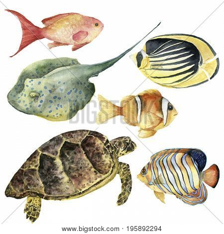 Watercolor tropical fish and underwater animal set. Hand painted Royal angelfish, Butterflyfish, Sea goldie, Clownfish, turtle and stingrey isolated on white background. For design, fabric or print