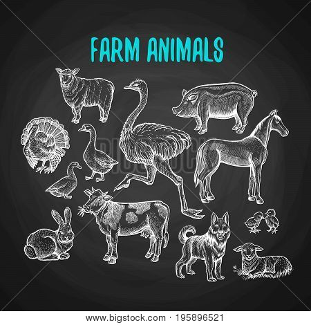 Set of farm animals in the style of chalk on a blackboard. Vector illustration of farm animals with cow, sheep, pig, horse, ostrich, guard dog, duck, rabbit, goose, turkey, lamb, pork.