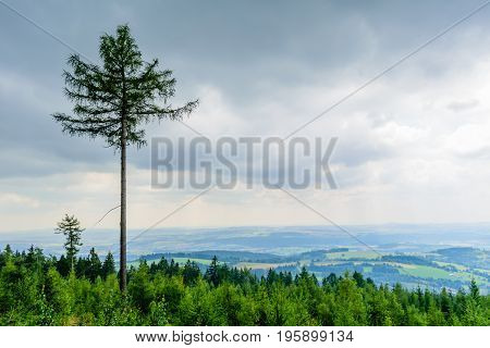 The tall coniferous tree rises above the others in the forest. In the background is beatufitul country. Dramatic looking clouds are low and massive.