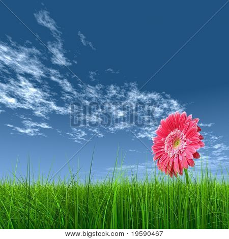 High resolution pink flower in grass with a blue sky background