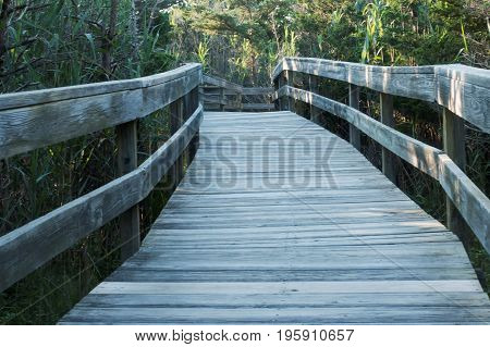 The wooden boardwalk that goes behind the Fire Island Lighthouse with tall green grass trees and bushes rising above it