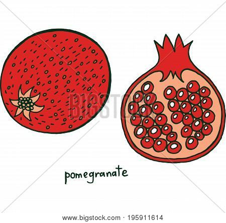 Pomegranate fruit coloring page. Graphic vector colorful doodle art for coloring book for adults. Tropical and exotic fruit line illustration.