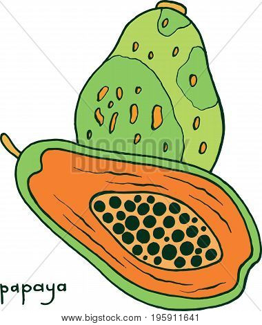 Papaya fruit coloring page. Graphic vector colorful doodle art for coloring book for adults. Tropical and exotic fruit line illustration.
