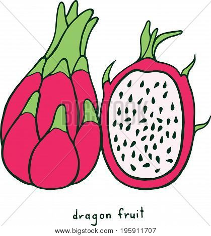 Dragon fruit coloring page. Graphic vector colorful doodle art for coloring book for adults. Tropical and exotic fruit line illustration.