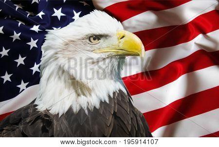 Photo of patriotic image of bald eagle