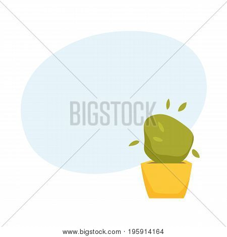 Soleyroliya in pot. Interior home and office houseplant cartoon vector illistration. Flower growth and gardening.