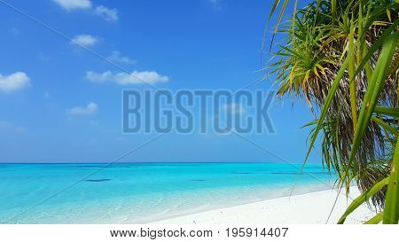 Maldives beautiful white sandy beach background with palm trees on sunny tropical paradise island with aqua blue sky sea water ocean 4k