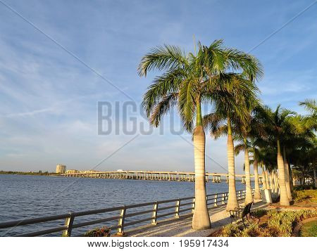 Palm trees along the Manatee River in Bradenton Florida with a bridge in the background