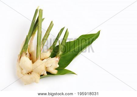 An image of fresh ginger and green leaves isolated over white background.