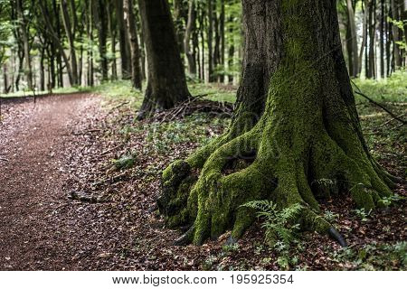 Closeup tree stump with hollow and covered by moss on forest hiking path in germany