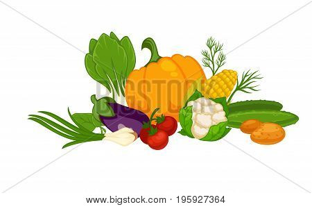 Sweet pumpkin, ripe tomatoes, big eggplant, leafy cauliflower, juicy cucumber, tasty corn, raw potatoes, healthy leek, organic lettuce and green dill stems in big heap isolated vector illustration.