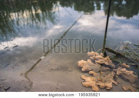 Dry oak leaves on the shore of the pond