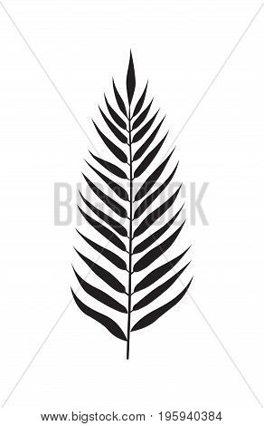 Palm leaf decor element. Vector illustration. Silhuette