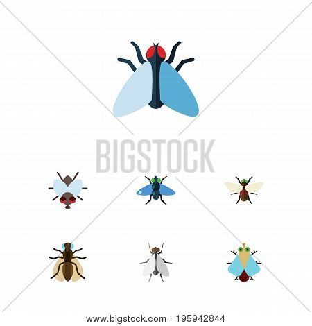 Flat Icon Fly Set Of Buzz, Mosquito, Bluebottle And Other Vector Objects