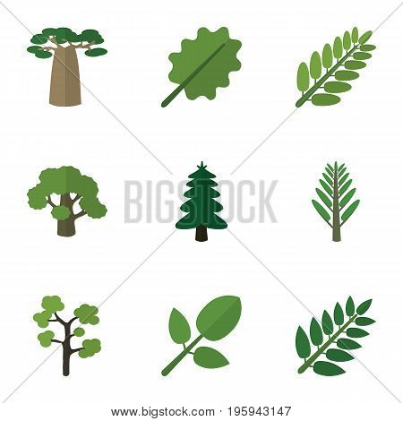 Flat Icon Bio Set Of Tree, Jungle, Acacia Leaf And Other Vector Objects