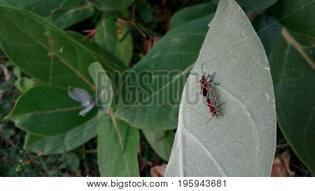 The bug is reproducing for its survival