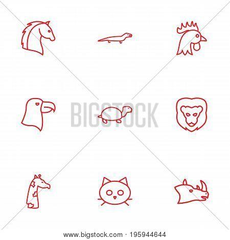 Set Of 9 Zoology Outline Icons Set